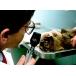 Koaxiálny oftalmoskop